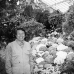 While working for Melbourne Council, Fitzroy Gardens Conservatory